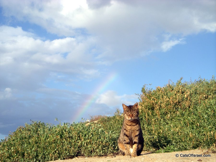 Charles Clore Garden Cat with Rainbow