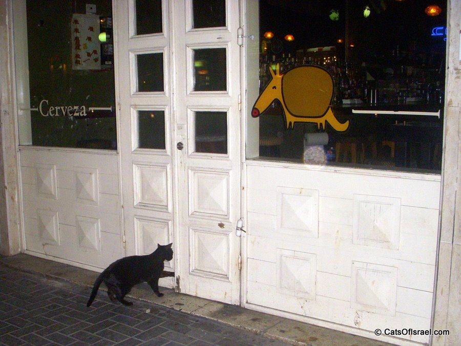 Armadillo Bar Cat