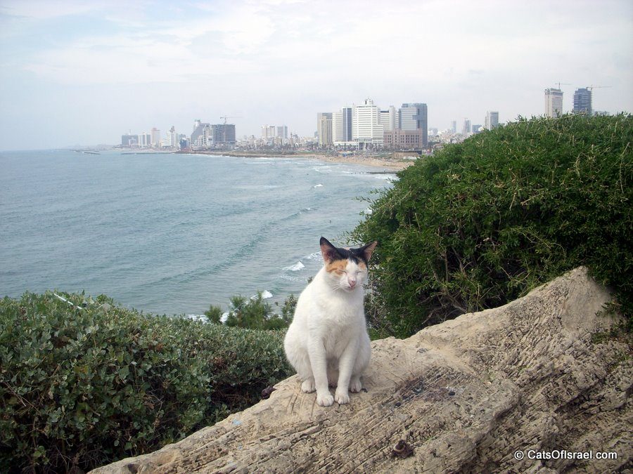 Tel Aviv Panorama Cat